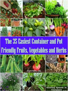 The 35 Easiest Container and Pot Friendly Fruits, Vegetables and Herbs... I need this when I start my garden!