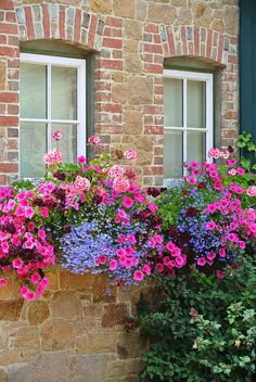 Pretty Pink and Blue Flowers in this Window Box