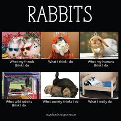 15 Hilarious Bunny Memes Will Have You Laughing All Day Long - World's largest collection of cat memes and other animals Wild Rabbit, Pet Rabbit, Rabbit Jokes, Cute Baby Bunnies, Funny Bunnies, Baby Animals, Funny Animals, Cute Animals, Funny Easter Memes