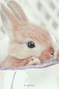 Bunny Rabbit!....