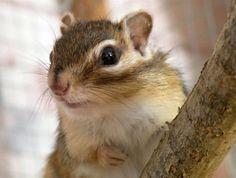 """""""O GRITO DO BICHO"""": Esquilo é resgatado depois de ficar preso numa lar... #ogritodobicho#falabicho"""