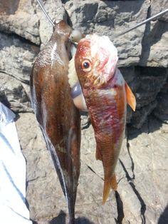 pêche d'un autre jour, profil