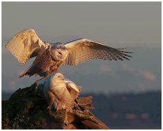 Owls! Love owls!!