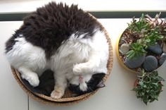 cats and plants...two of my favorite things