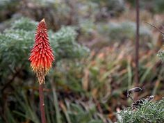Aloe vera allergia – ez a rendkívül jótékony hatású gyógynövény is okozhat allergiás tüneteket. Hasznos tudnivalók, információk. Poster Prints, Framed Prints, Canvas Prints, Art Prints, Beautiful Flowers Pictures, Flower Pictures, Vintage Prints, Vintage Posters, Wow Image