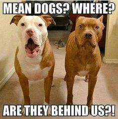 HAHA LOL Funny Animal Pictures, Animal Pics, Funny Animals, Don't Judge Me, Crazy Things, Pit Bulls, Guitars, Bugs, Funny Animal Pics