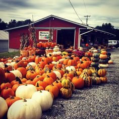 Outdoor display of fall pumpkins in white, orange and green at a red barn country farm stand.