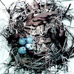 nido de ramitas y hojas secas del patio amarradas y huevos de plasticina azul