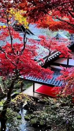 Beautiful Places In Japan, Amazing Places, Beautiful Nature Scenes, Love Garden, The Good Place, Earth, Album, Pretty, Diy Landscaping Ideas