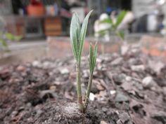Llegan las primeras semillas 'opensource'