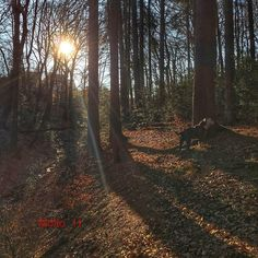 "Guten Morgen IG good morning #iphone6sphotography #loves_united_germany #ig_nrw #wald #forest #goodmorning #sunshine #nature #naturelovers #ichliebewetter #februar2016 #Ruhrgebiet #sprockhövel #sprockhövellove #love_ruhrgebiet #trees #loves_united_trees #like4like #ichliebewetter #beautiful #follow #cool #forestlovers #heimat #landscape #heimatliebe #landschaft #travel by molto_11 Follow ""DIY iPhone 6/ 6S Cases/ Covers/ Sleeves"" board on @cutephonecases http://ift.tt/1OCqEuZ to see more ways…"