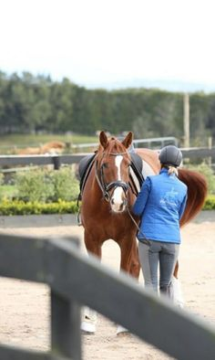 Here I explain the 8 key muscles that are involved in helping with your dressage position. Horse Therapy, Gluteus Medius, Horse Ranch, Core Muscles, Horseback Riding, Horse Riding, Dressage, Beautiful Horses, Mammals