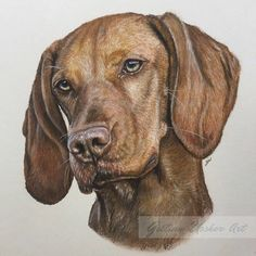 """'Amber', 10"""" x 8"""" pastel Many thanks to Jenny Kemp Photography for use of her brilliant reference image www.gillianussherart.com"""