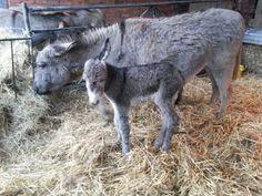 Baby Donkey Bodenham Arboretum