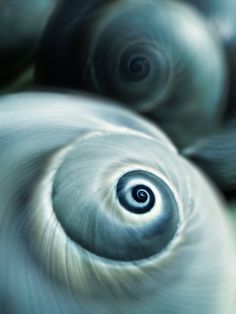 #Shell spiral #design so mesmerizing you could easily get lost staring at it.