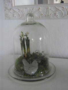 vintergækker i glasklokke