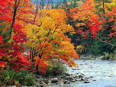 Autumn Season 15 Background - Hivewallpaper.com