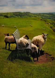 Baaa.. st seat in the house by Keith Britton