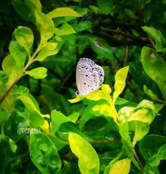 A #Butterfly effect