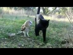 """""""Whoooo"""" Knew Cats Were Such Good Friends With Owls?! http://mycatcentral.com/whoooo-knew-cats-good-friends-owls/"""