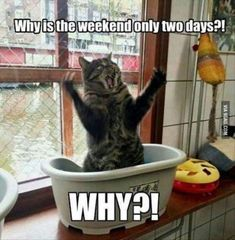 These funny dogs and cats are on a undertaking to make you smile.See more ideas about Funny animals, Dog cat and Cute animals.Read This Top 24 Funny Cats and Dogs Humor Animal, Funny Animal Quotes, Cute Funny Animals, Funny Animal Pictures, Funny Sayings, Hilarious Pictures, Funniest Animals, Humorous Quotes, Humorous Pictures