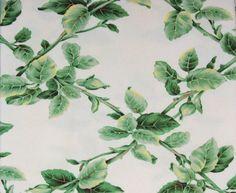 Ivy Lattice