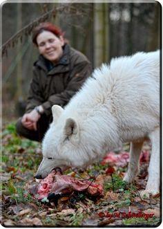 Foto by Michael Schönberger - Polarwölfe - Wolfspark Werner Freund