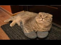 Gatito pillado