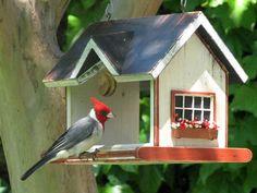 Andrés Milanowski, arquitecto de descendencia polaca, hizo un arte del armado de refugios para aves y lo llamó Vrubel BirdHomes.  Todo emp...