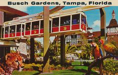 Busch Gardens - Tampa, Florida Another place you must see.especially the animals Florida Girl, Old Florida, Vintage Florida, Naples Florida, Tampa Florida, Florida Travel, Florida Beaches, Tampa Bay, Clearwater Florida