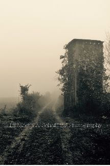 Fog and Vines by Elizabeth A. Schaffner Photography  #Photography #Travel #Landscape #Abandoned #Buildings #Places #France #BlackandWhite