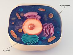 Anatomical structure of biological animal cell with organelles , Plant Cell Parts, Animal Cell Anatomy, Edible Cell Project, Plant Cell Structure, Cell Model Project, Biology Test, Biomedical Science, Trash Art, Cell Membrane