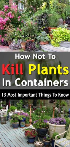 Do you kill your plants often? Well here're 13 things you must avoid to make your container plants keep growing. #Vegetablegardenbasics