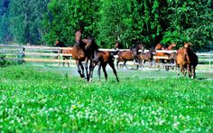 The Dream of Dreamcatcher Meadows In 10 years, these Hanoverian horse-farm own. Horse Shop, Horse Farms, Training Center, Beautiful Horses, 10 Years, Equestrian, Dream Catcher, Top, Cute Horses