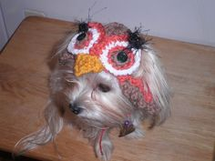 Crocheted Owl Hat for Cat or Dog for Fun or Costume by Fancihorse, $9.00