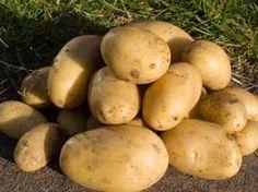 Growing Potatoes the No-Dig Way