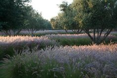 A garden in Morocco; designed Luciano Giubbilei  (i'd love to see this with three species of grasses)