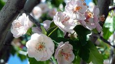 Frühlingsstauden pflanzen: Für viel Farbe im Garten - Ratgeber - Sat.1
