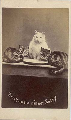 vintage photo with 3 cats