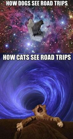 How dogs/cats see road trips