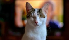 Learn To Speak Your Cat's Language