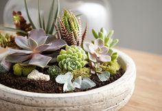 Step By Step Terrarium How To - Discover, a blog by World Market