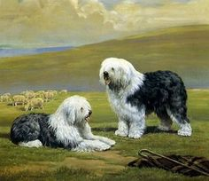 EDWIN MEGARGEE - OLD ENGLISH SHEEPDOGS - CANVAS PRINT
