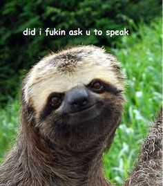 Sloth that doesn't care what you have to say | The 25 Greatest Sloths The Internet Has Ever Seen