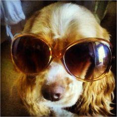 Mully rockin her stunner shades