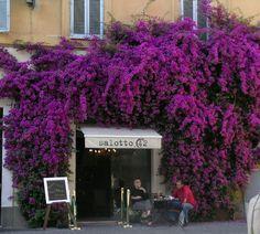 Salotto 42, Piazza di Pietra, Roma, Italy
