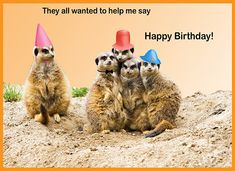 : Cute Happy Birthday Card With Fun Grumpy Cat Vector Image Images Cats. Hamster Cartoon Stock 123664196 A Picture Of. Happy Birthday Animals Funny, Happy Birthday Video, Cute Happy Birthday, Cool Birthday Cards, Homemade Birthday Cards, Happy Birthday Pictures, Animal Birthday, Birthday Wishes, Funny Birthday