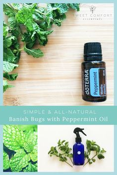 Did you know you can use peppermint essential oil to get rid of all kinds of bugs -- like garden pests, ants, spiders, flies? It's simple and all-natural. Essential Oils For Breathing, Essential Oils Cleaning, Doterra Essential Oils, Essential Oil Blends, Peppermint Oil Uses, Doterra Peppermint, Pepermint Oil, Roller Bottle Recipes, Cypress Oil