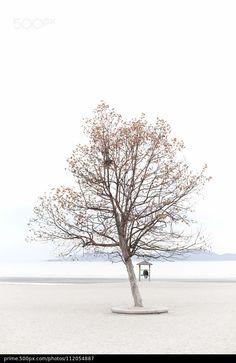 一棵樹,一對戀人。 - stock photo