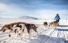 Fjällräven Polar tulee taas! Hae mukaan Polariin! Pyri saamaan mahdollisimman monta ääntä 12.12.2014 mennessä!